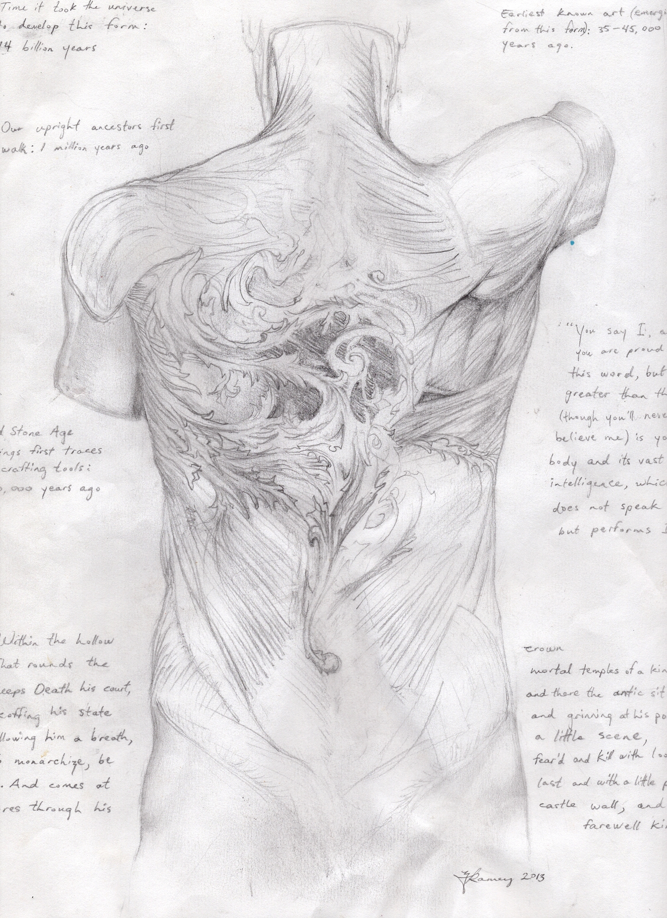 Human Anatomy Archives