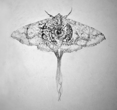 Moth, graphite, 2013