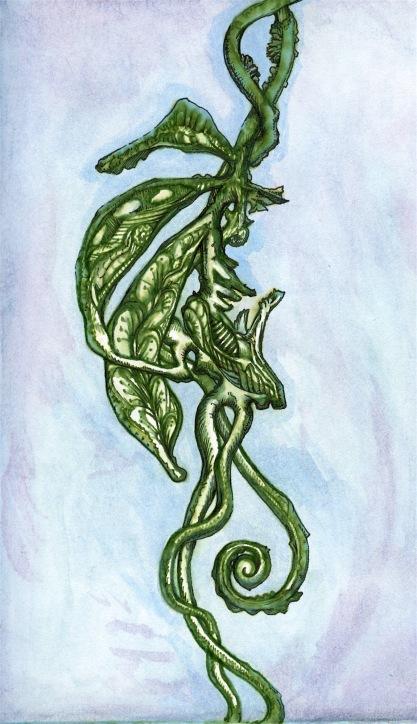 Green ivy fern plant
