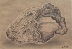 Gnarled Heart, graphite on recycled paper, 2011, by Jennifer Ramey