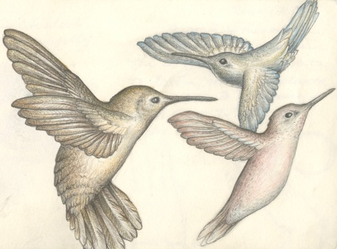 Hummingbirds, red sketchbook, 2015