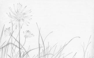 Wildflow'rs, red sketchbook, 2015