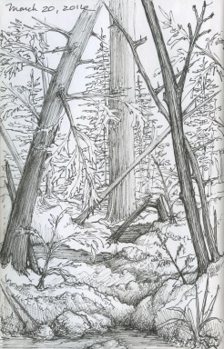 Woods sketch, black sketchbook, 2016