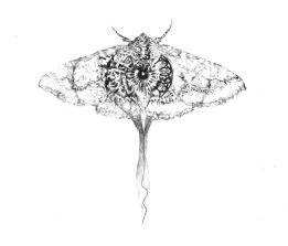 Moth, 2013